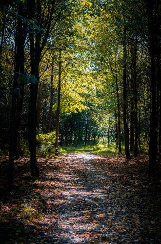 https://gaithouseevents.com/wp-content/uploads/2019/11/trail_main.jpg